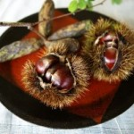 栗の美味しい茹で方と簡単に剥く方法