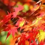 関西の紅葉狩りおすすめスポット